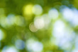 abstract image of a green plant background closeup