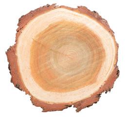 Cross-section of stem tree