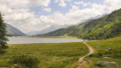Maloja, Silsersee, Sommerwanderung, Schweizer Alpen