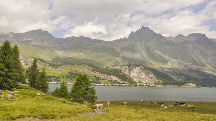 Maloja, Dorf, Silsersee, Schweizer Alpen, Sommer