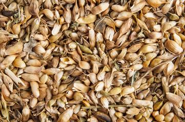utsho suneli seeds background