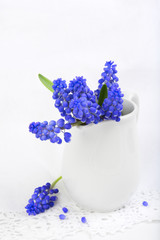 Vase with small bouquet of grape hyacinth flowers