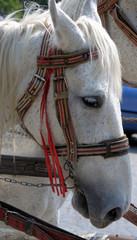 Horse's head.