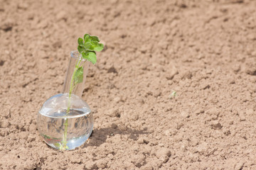 flask with clear water and plant on dry soil