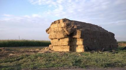 Hay on the farm