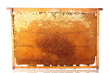 yellow beautiful honeycomb frame with honey, isolated on white