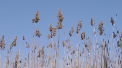 Reeds and marshes