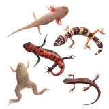 Set of amphibians and reptiles isolated on white background poster