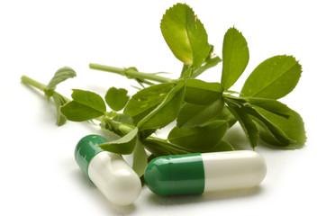 Medicago sativa Luzerne Erba Medica cultivée Alfalfa Blålusern