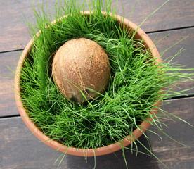 junges katzengras mit kokosnuss
