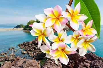Leelawadee flower Island
