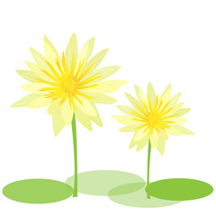 Yellow water lily vector
