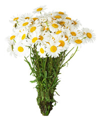 daisy bouquet on the white background
