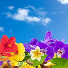 fleurs tropicales sur fond de ciel