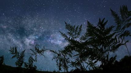 Calm starry night