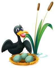 A duck near the nest with eggs