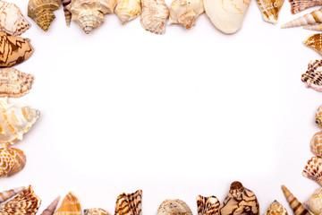 Muschelhintergrund Schreibrahmen