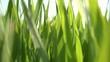 Winter crops green