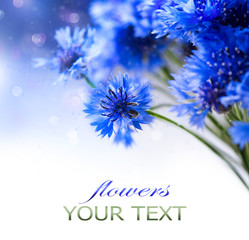 Cornflowers. Wild Blue Flowers Blooming. Border Art Design