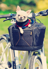 small dog in a bicycle bag
