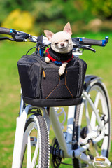 cute dog in bycicle basket