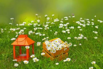 Gänseblümchen und Dekoration auf grüner Wiese