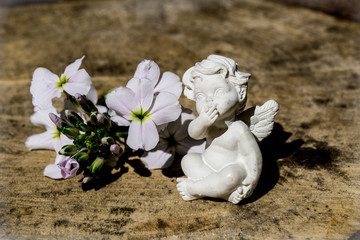 angel with white flower, flowers, small wings