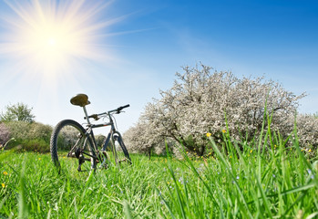 bicycle in apple garden