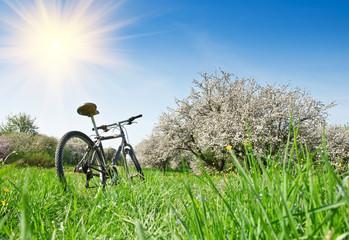 bicycle in apple garden