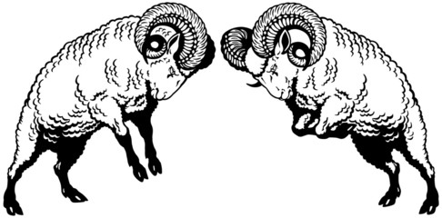 two rams fighting black white