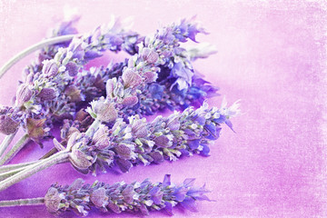 Bunch of a lavender flowers on a purple vintage background