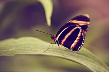 Schmetterling seitlich auf Ast