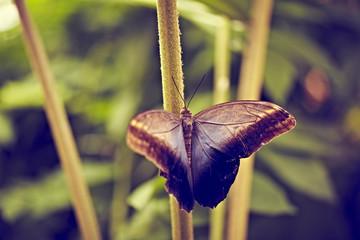 blauer Schmetterling auf Stengel