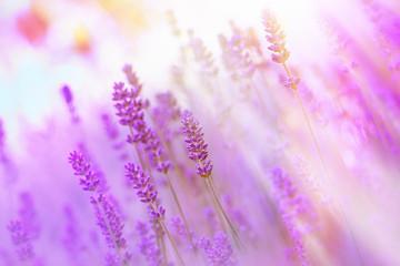 Beautiful, beautiful lavender
