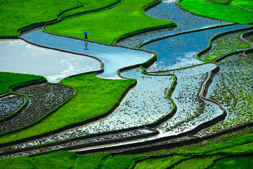 Rice fields on terraces in vietnam