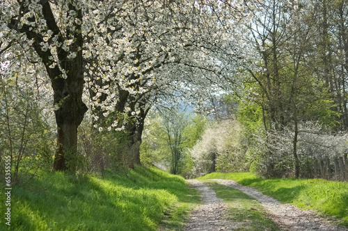 Poster Weg durch blühende Landschaft im Frühling