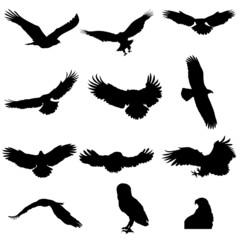 Silhouettes of eagle, hawk, owl, falcon, isolated
