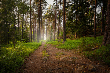 Hiking track in forest during a summerset