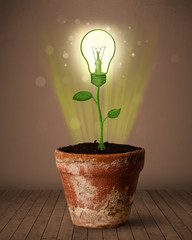 Lightbulb plant coming out of flowerpot