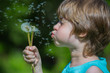 Cute Boy blowing dandelion seeds