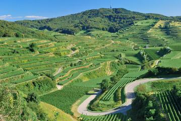 Weinbaugebiet am Berg Totenkopf im Kaiserstuhl