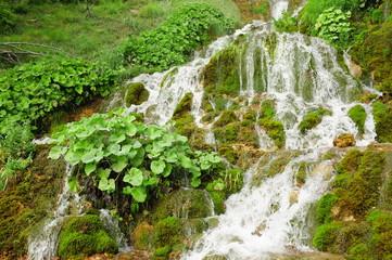 Sopotnica Springs, Serbia