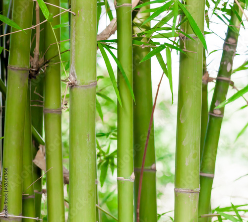 Aluminium Bamboe Bamboo forest background