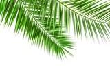 Palmwedel isoliert auf weiß