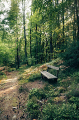 Bench in the Austrian Forest
