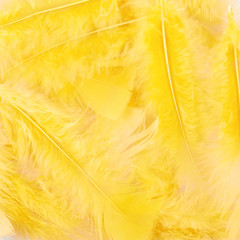 Yellow feathers composition