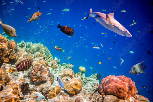 Tropical Coral Reef.