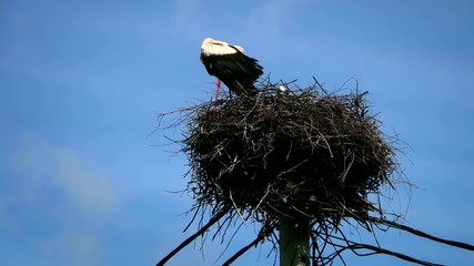 A couple of stork in the nest