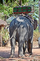 elephant with trekking bench
