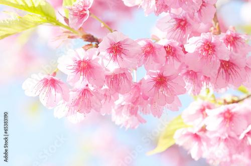 Naklejka sakura flower